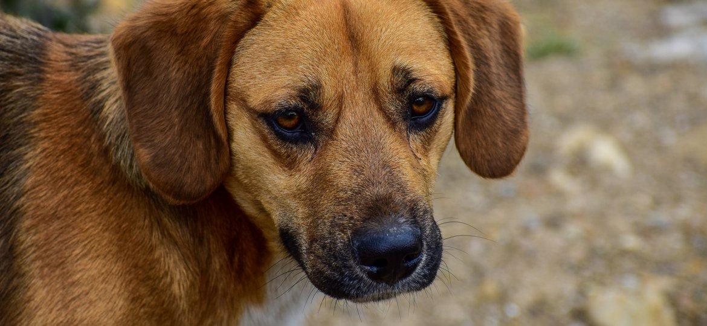 luto perda animal de estimação